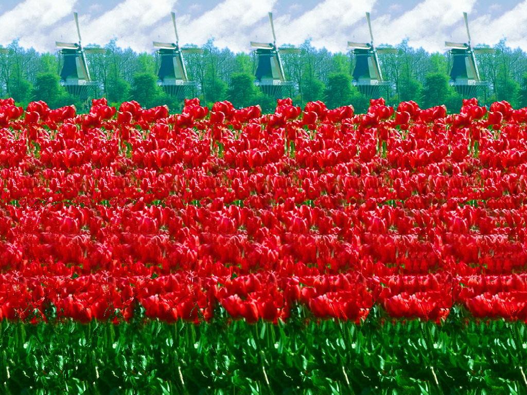 Картинки стерео с цветами создания правильного